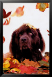 Dog in Leaves Lmina