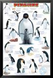 Penguins Chart Affiches