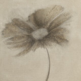 Tonal Flowers II Prints by Emma Forrester