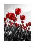 Tulipes Affiches