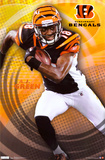 Bengals - A.J. Green 2011 Photo