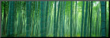 Bamboo Forest, Sagano, Kyoto, Japan Mounted Photo by  Panoramic Images