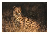 Spotted African Cat Prints by Kilian