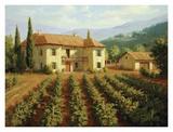 Roger Williams - Tuscan Vineyard Plakát