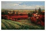 Tuscan Fields of Red Poster di Matt Thomas