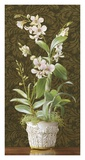 Orchid Dendrobium Posters by Mary Kay Krell