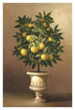 Potted Orange Tree Posters by  Welby