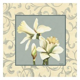 Daffodils With Scroll Posters by Catherine Jones