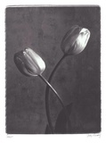 Criss Crossed Tulips Prints by Judy Mandolf