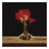 Red Rose Plakat af Patrick Farrell