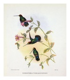 Dorifera Veraguensis Posters by Aaron Ashley