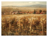 Italian Golden Vineyard Poster by K. Adams