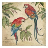 Macaw Art by Betty Whiteaker