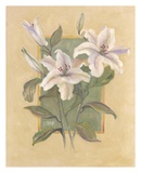 White Lilies Prints by Shari White
