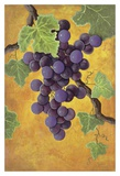 Red Wine Grapes Print by Jennifer Lorton