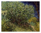 Lilac Bush, 1889 Prints by Vincent van Gogh