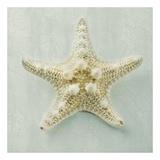 Ocean Jewel III Kunstdruck von Suzanne Goodwin