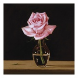Pink Rose Posters by Patrick Farrell