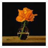 Orange Rose Poster by Patrick Farrell