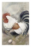 Coat of Many Colors Rooster Prints by Alma Lee