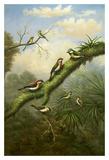 Birds of Plenty Posters by  Bilben