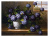 Hydrangea Blossoms II Prints by  Welby