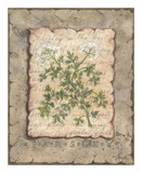 Vintage Herbs, Parsley Poster by Constance Lael