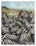 Zebra Gathering Art by Kilian