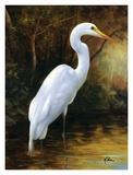 Evening Egret Poster by  Kilian