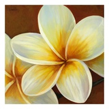 Frangipani I Prints by Clunia 