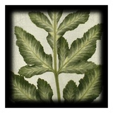 Variegated Fern I Prints by June Hunter