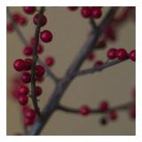 Red Berries II Posters af June Hunter