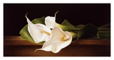 Calla Lillies on Ledge Posters by Patrick Farrell