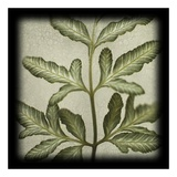 Variegated Fern III Print by June Hunter