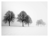 Winter Trees II Posters by Ilona Wellmann