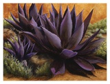 Purple Agaves on the Rocks Print by Beth Zink