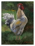 White And Yellow Rooster Poster by Nenad Mirkovich