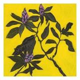 Flowers III Posters af Doris Macdougall