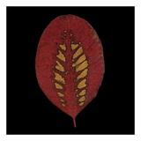 Smokebush Leaf on Black Plakat af June Hunter