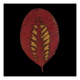 Smokebush Leaf on Black Print by June Hunter