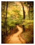 Enchanted Forest Prints by M. Ellen Cocose