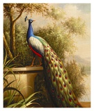 Regal Peacock Print by Unknown