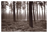 Forest Mist II Prints by Richard Osbourne