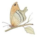 Schmetterling in Orange Kunstdruck von Peggy Abrams