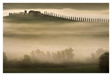 Trees in Mist II Prints by Jim Gamblin