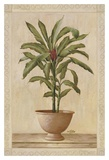 Potted Palm I Art by  Welby