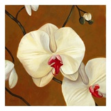 Orquideas Blancas I Posters af Clunia