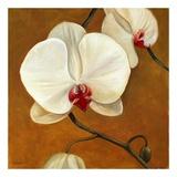 Orquideas Blancas II Plakater af Clunia