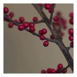 Red Berries I Kunst af June Hunter