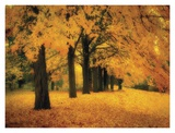 Gold of Autumn East Prints by M. Ellen Cocose